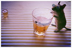 light party food sun me beer glass glasses rodent amber time drink bowl alcohol enjoys degu friday creature hoegaarden anthropomorphism degus octodon