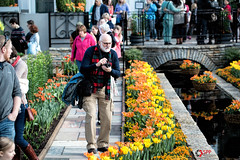 On the hunt.... for the perfect shot! (SPP - Photography) Tags: flowers plants usa como minnesota scarf canon spring photographer blossom blossoms blooms twincities saintpaul mn comopark blooming 6d flowersplants saintpaulmn marjoriemcneelyconservatory eos6d mymmc