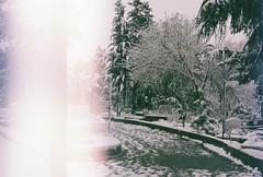 000010 (kirmizidemlik) Tags: winter snow cold green film grave graveyard analog 35mm vintage dead 50mm snowy istanbul retro explore 17 analogue tress analogphotography kar expiredfilm xg1 filmphotography minoltaxg1 analogcamera amlca undersnow filmisnotdead filmlmedi