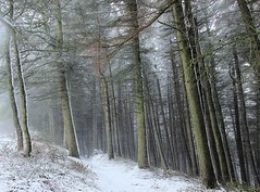 Edge of the Forest. (A tramp in the hills) Tags: forest langsett southyorks