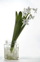 Hyacinth (Gary Stamp cPAGB) Tags: flowers stilllife canon arty