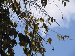 "Tikal: un oiseau ;) <a style=""margin-left:10px; font-size:0.8em;"" href=""http://www.flickr.com/photos/127723101@N04/25635894354/"" target=""_blank"">@flickr</a>"