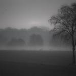Schwalingen - Novembermorgen thumbnail