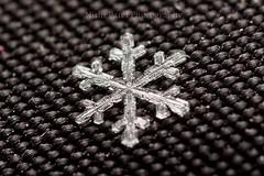 IMG_9199 (nitinpatel2) Tags: snowflakes patel nitin
