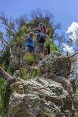 The Pinnacle - Looking up (NettyA) Tags: australia bushwalking qld queensland bushwalk thepinnacle springbrook goldcoasthinterland 2016 springbrooknationalpark scenicrim bushwalkers seqld warriecircuit scbwc sonya7r
