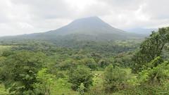 Arenal Volcano, Costa Rica IMG_0978 (Hart Walter) Tags: rainforest birdwatching fortuna socialflycatcher iguanas epiphytes euphonia tropicalforest arenalvolcano costaricanature swalowtailedkite paraisoresort misticohangingbridgespark