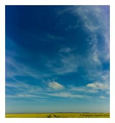West Wight vertorama (frattonparker) Tags: blue sky yellow clouds raw isleofwight cumulus wispy stratus canola cirrocumulus cirrus cumulonimbus altocumulus rapeseed stratocumulus oilseed tamron28300mm nikond600 vertorama btonner frattonparker lightroom6
