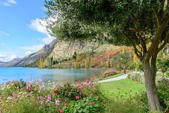 Autumn on Lake Wakatipu (Jan van_Dijk) Tags: flowers newzealand lake colour nature meer natuur nz otago queenstown bloemen nieuwzeeland walterpeakfarm