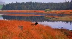 J'en crois pas mes yeux! (dominiquita52) Tags: dog chien water reflections countryside eau labrador yorkshire reservoir