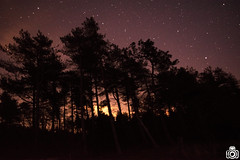 The night sky (TimPockney) Tags: trees sky nature night stars nikon astro astrophotography d5300