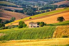 Country landscape in Marches (Italy) (clodio61) Tags: old flowers summer italy house plant color tree green nature field rural landscape photography europe day outdoor farm country hill sunny row sunflowers cypress agriculture pesaro ancona marches