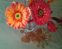 gerbera2 (gracielahellstrom) Tags: painterly daisies reflections still gerbera naturemorte