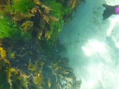 Occy pots (Figgles1) Tags: beach snorkel south snorkeling pot pots octopus fremantle groyne southbeach fsc occy southfremantle fremantlesailingclub p1020069