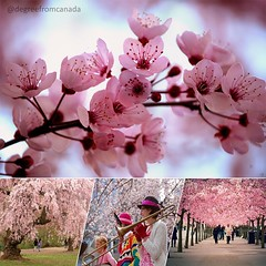 Vancouver Cherry Blossom Festival (degreefromcanada99) Tags: pink nature smile fashion vancouver nationalpark spring blossom bluesky celebration human gift nationalparkservice nofilter naturalstone goodtime cherryblossomfestival ilovetrees roem travelbreak  liveauthentic mbaonemi roemofficial