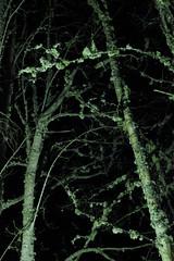 (Aiteann) Tags: tree lichen