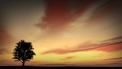 Land to Escape (Tony Agramunt) Tags: sunset colour tree clouds skyscape landscape quiet afternoon escape tranquility minimal land minimalism tonyagramunt