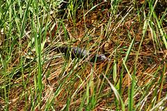 Mały aligator | Small aligator