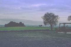 scientifically sculpted sky (galwachs) Tags: sky naturaleza mist tree verde green nature fog clouds haze cel natura vert ciel cielo nubes árbol nuages arbre niebla verd boira nubols empordà