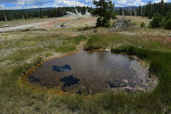 Upper Geyser Basin, Yellowstone, WY (lotos_leo) Tags: travel summer green nature pool landscape nationalpark outdoor northamerica yellowstone wyoming np geyser wy uppergeyserbasin  oldfaithfulbasin   libertypool crossamerica2015