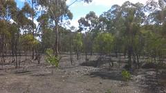 Para Wirra 18 (WEA Ramblers) Tags: hiking australia bushwalking southaustralia parawirra yattalunga fayharding