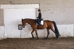 IMG_6380 (Marc van der Molen) Tags: manege paarden noordwijkerhout 2016 dressuur langeveld