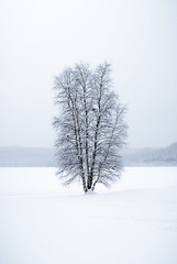 Isolated (Diaz Paredes Photography) Tags: winter white tree nature zeiss landscape haze day sweden sony exploring explore daytime simple exploration isolated winterlandscape landskap winterday winternature sonylens modernature