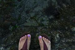 (sweet.disposition) Tags: ocean california sea feet beach toes sandals bigsur lilac barnacles pfeifferbeach