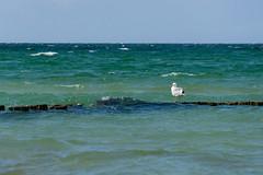 TH20150514A603331 (fotografie-heinrich) Tags: strand mwe ostsee vogel wellen zingst