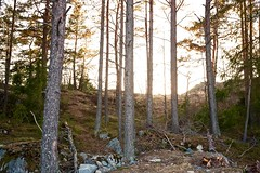 Mystery evening (nypan_sthlm) Tags: street sunset mystery forest landscape evening sweden outdoor tre norrtlje