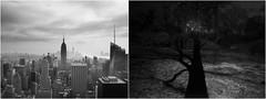 new york city (sergio tranquilli) Tags: newyorkcity landscape emptiness