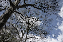Trees - Epping (samcadby) Tags: didi epping samdee