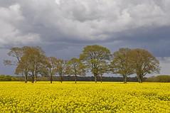 Tree Circle in Rape (Chris Mullineux) Tags: trees circle memorial farm rape oxfordshire aircrash middletonstoney