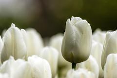 (me_myself_n_eye) Tags: flowers sigma150500mmf563apodgoshsm
