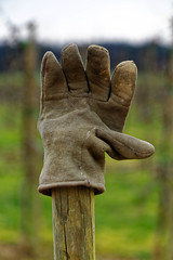 Gimme five (wolf4max) Tags: nature glove stillife gimmefive gloveart
