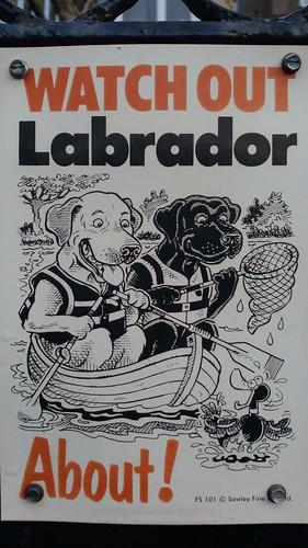 Attention au labrador!