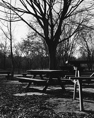 Tables and Winter Trees (Lig Ynnek) Tags: blackandwhite tree film forest seoul southkorea picnictable tmy400