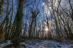 21/52 LightInTheForest (Christian_Philippe) Tags: trish lightintheforest