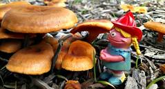 Betty Lou & Some Mushrooms (John 3000) Tags: nature mushrooms toys natureza muppets sesamestreet shrooms juguetes bettylou firemanhelmet toysinnature