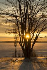 a new day (Barbara A. White) Tags: snow ontario canada tree silhouette vertical sunrise ottawariver woodlawn constancebay lensstar