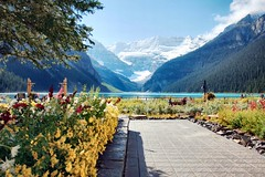 Lake Louise, Banff National Park, Alberta, Canada - p1197 (photos by Bob V) Tags: flowers mountains rockies flowerbed alberta banff rockymountains lakelouise albertacanada banffnationalpark canadianrockies banffpark cans2s