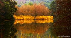 nature et reflets