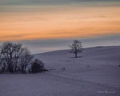 Vastness.... (acbrennecke) Tags: trees winter orange snow landscape nikon vastness landleben nikon5500 achimbrennecke