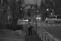 Dog walk (odeleapple) Tags: dog 50mm 1 evening nikon walk nikkor v1 afs ft1 f18g