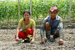 A couple working together in the farm field. (IWMI Flickr Photos) Tags: nepal water technology farmers farming agriculture gender irrigation southasia smallholder