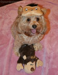 Its the Year of the Monkey! (yourdesignerdog) Tags: new dog hat tongue out monkey costume all wordpress year chinese tuesday posts celebrate ifttt