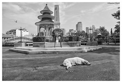 the still life in bangkok (Dax Ward Photography) Tags: dog pagoda asia southeastasia chinese streetphotography thai thaipeople thaidog chinesecemetery thailife asiantravel bangkokstreet thaistreetphotography