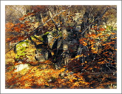 Autumn impression (Stella VM) Tags: autumn light mountain beautiful leaves forest colours foliage bulgaria