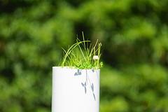 weeds (christinemargaretlynch) Tags: weeds pipe