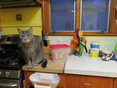 Percy is keeping an eye on things (andrea z) Tags: cat peep cheetos diorama percy graycat isnothingsacred deercull pureannarbor apocalypseannarbor cheetowhore peepcull