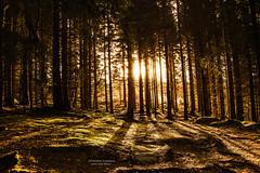 Into The Wild (Fredrik Lindedal) Tags: wood trees light sun sunlight tree forest landscape morninglight moss nikon shadows sweden outdoor skog serene sverige intothewild d7200 iamfredriklindedal lindedal
